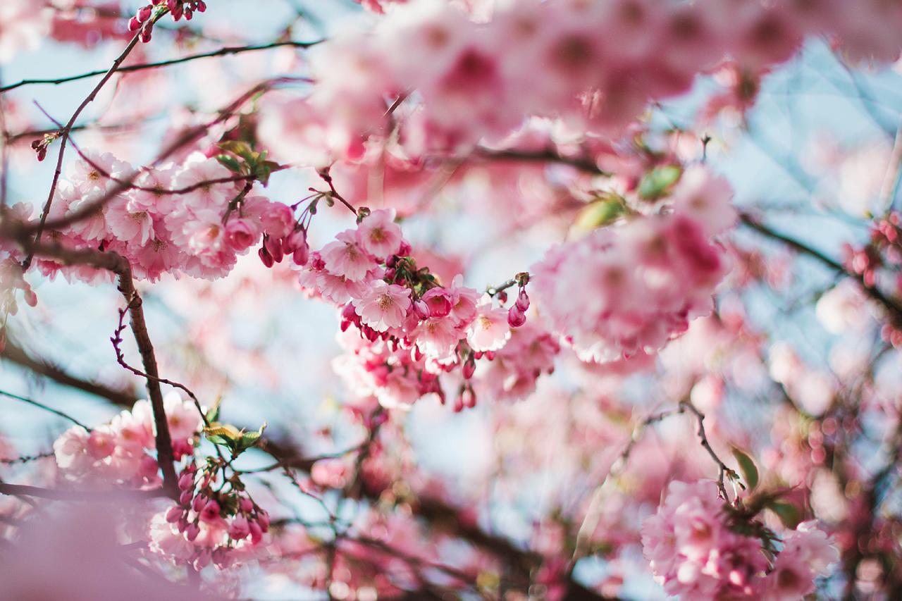 flowers-2608839_1280